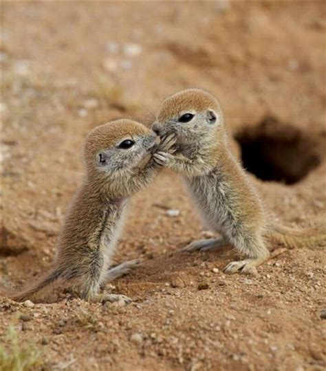 baby prairie dogs baby prairie dogs daily picks and flicks