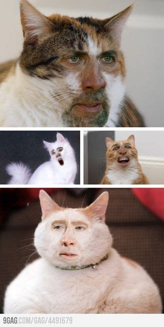 9gag cat tattoo 9gag cage cat face swap on imgfave