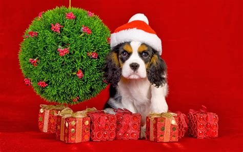 christmas wallpaper with dogs my christmas gift for dog lovers wallpaper beautiful