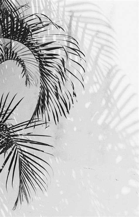 aesthetic wallpaper white photography simply aesthetic p h o t o g r a p h y