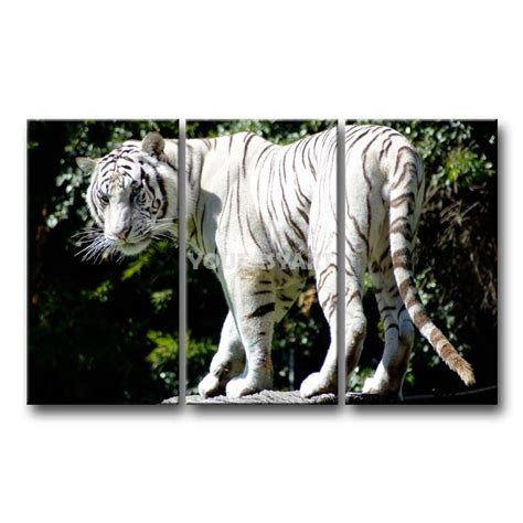 white tiger home decor 3 piece black and white painting on canvas wall art rare