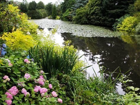 Bog Garden by Bog Garden Designs Outdoortheme