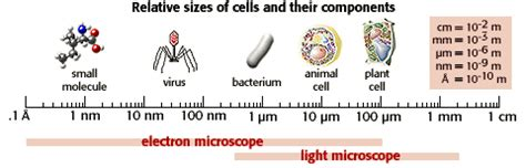 Human Histology Microscopic Anatomy
