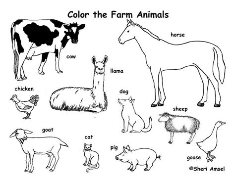 the coloring book for cool who animals books farm animals coloring page