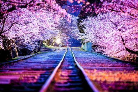 wallpaper bunga sakura bergerak 10 gambar bunga sakura terpopuler gambar animasi gif swf
