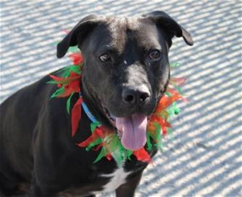 where can i bring my for adoption pin by pennsylvania spca on adoptable dogs