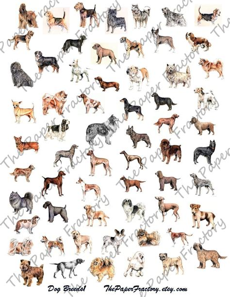 all types of dogs names of all types of dogs