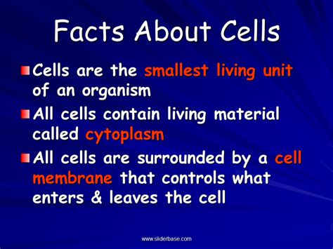 study of biology presentation biology sliderbase