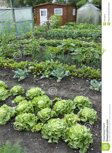 Allotment Garden Bed Stock Photo Image Of Grow Summer Allotment Vegetable Gardening