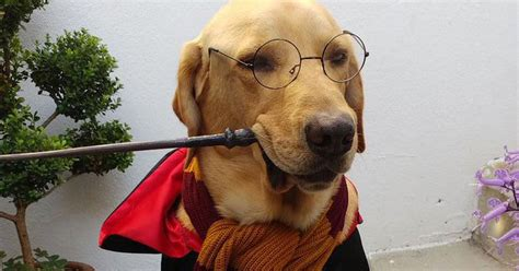 dog dropped  mic    harry potter costumes