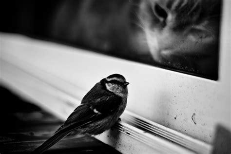 cat and bird black cat and a bird animals photo 31543382 fanpop