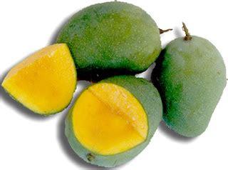 mangifera storvilade mangifera indica