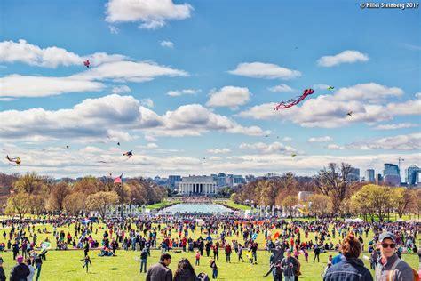 national cherry blossom festival national cherry blossom festival curbed dc