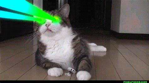 Laser Cat Meme - kitty cyclops with rainbow lasers meme frontier