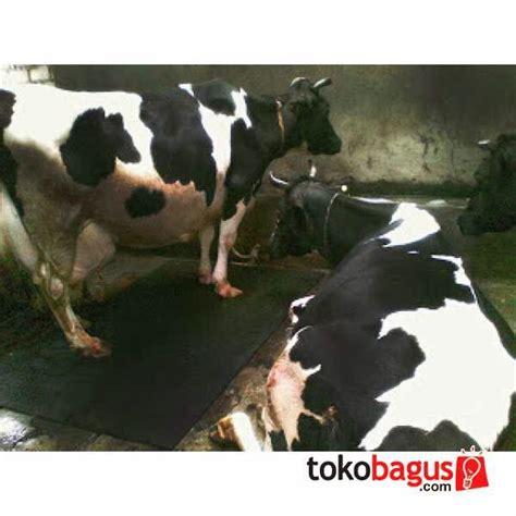 Alas Kandang Kuda warkop bisanta rubber cow mat karpet sapi