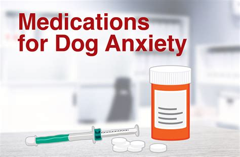 anti anxiety meds for dogs 100 how to relieve anxiety fidget spinners the distraction craze