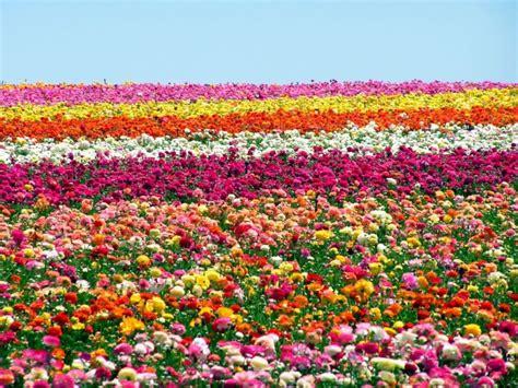 significato dei sogni fiori sognare fiori cosa vuol dire significato e numeri da giocare