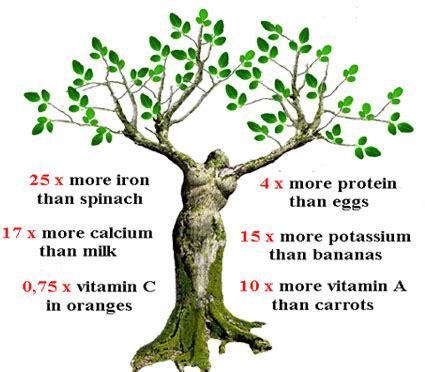 Importance Of Plant Diseases - moringa tree benefits buy moringa oleifera products