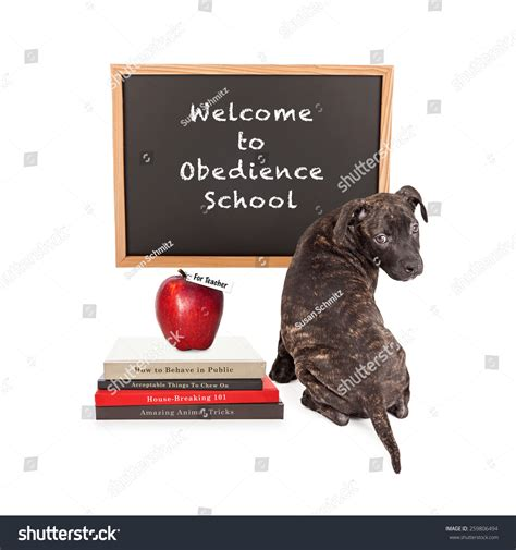obedience school puppy front chalk board that stock photo 259806494