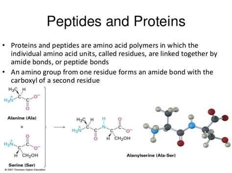 protein amino acids proteins and amino acids
