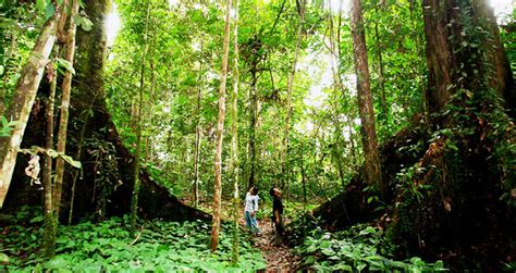 bali jungle trekking bali trip adventure