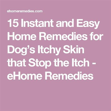 itch relief for dogs best 25 itching ideas on itchy remedies what causes yeast