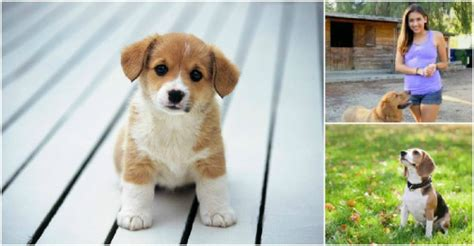 how to potty a in 7 days potty your puppy in 7 days