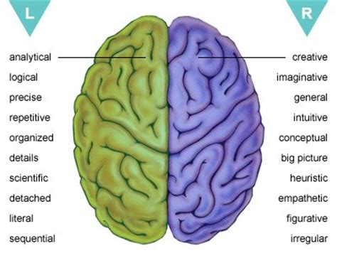 sections of the brain and what they control living with brain injury biaa