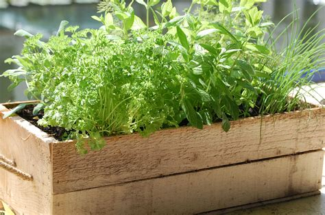 container herb gardening 10 herbs you can grow in containers herbs and gardens