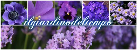 fiori di colore viola linguaggio dei fiori di colore viola il giardino tempo