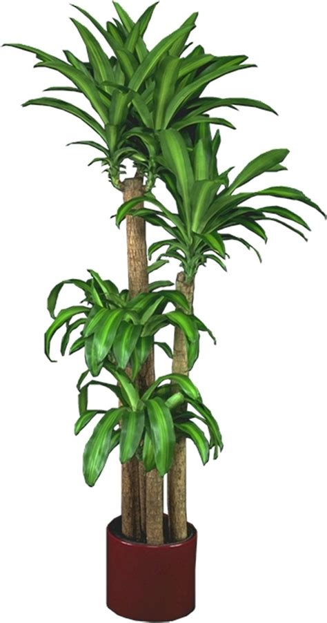 inndor plants 25 best ideas about tropical house plants on pinterest