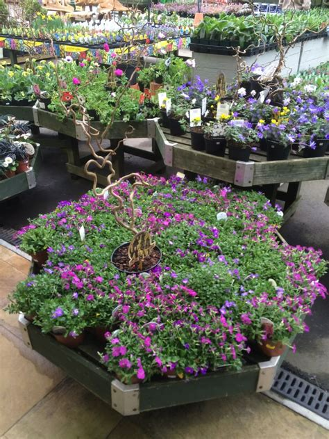 Garden Center Merchandiser 17 Best Images About Plant Merchandising On