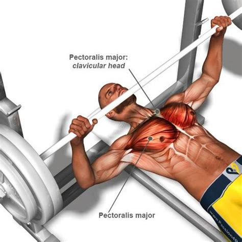 bench for chest exercise best chest workout and great chest workout exercises for