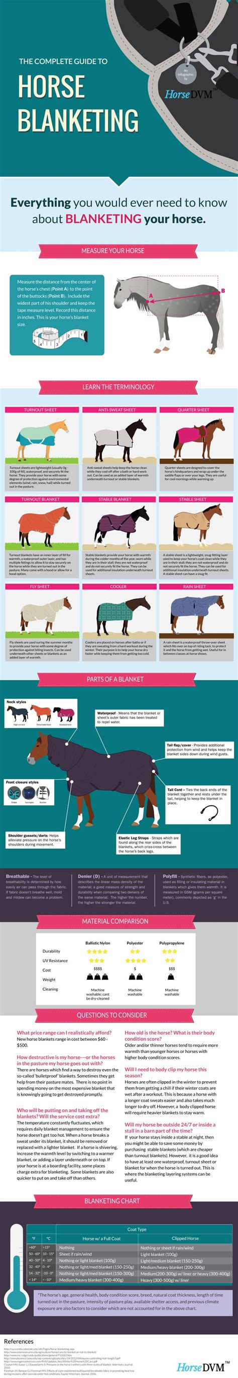 themes for names of horses 25 great ideas about horse facts on pinterest horse