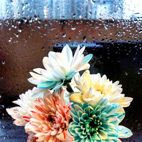 diys with food coloring how to dye flowers with food coloring activitybox