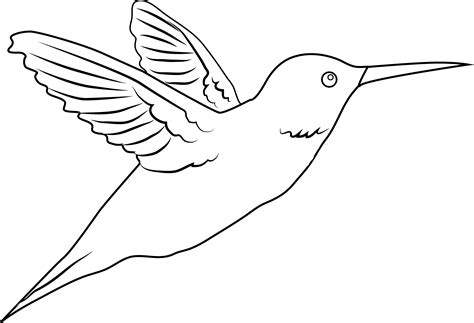 Hummingbird Outline by Simple Hummingbird Outline Coloring Pages