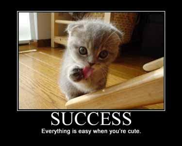 Success Cat Meme - motivated cats series 1