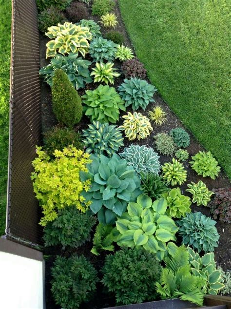 Front Garden Planting Ideas Cool Gorgeous Hosta Planting For The Shade Garden Pinterest Planting Gardens