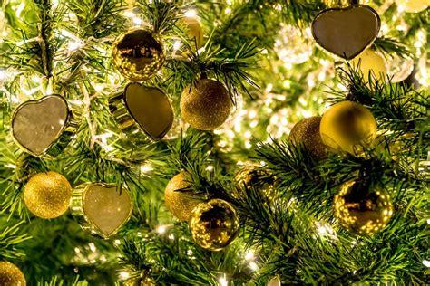 precio de los arboles cortados de navidad estos los 225 rboles de navidad m 225 s bonitos en la ciudad de m 233 xico