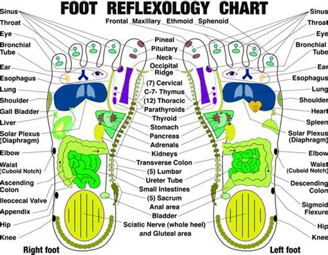 Reflexology And Detoxing by Top 32 Ideas About Acupuncture On Ear
