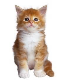 Gato Related Keywords & Suggestions - Gato Long Tail Keywords Gato