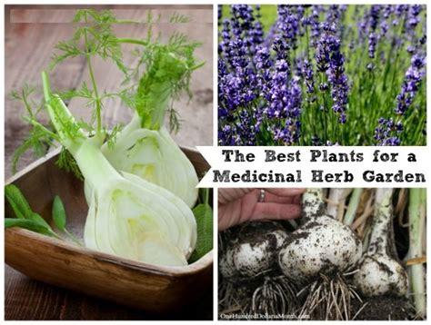 medicinal herb garden the prepared page