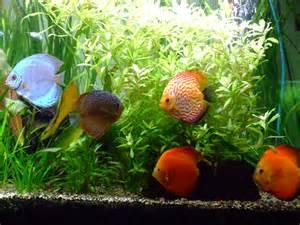 esp 232 ce poisson d eau douce le monde des aquariums