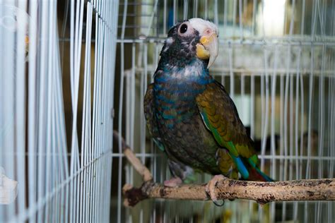 rescued birds ohio aspca assists in removing more than 600 birds from ohio hoarding aspca