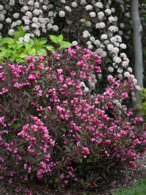 flowering shrubs  sun hgtv
