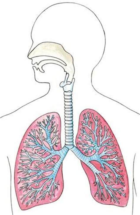 Beschriftung Lunge by Biologiefragen Atmung