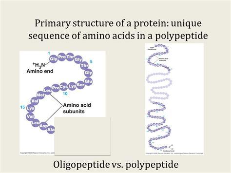 protein vs polypeptide cgi proteins crash course biomolecules ppt