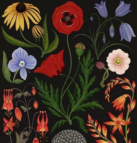 libro botanicum botanicum el libro de las plantas galiciangarden