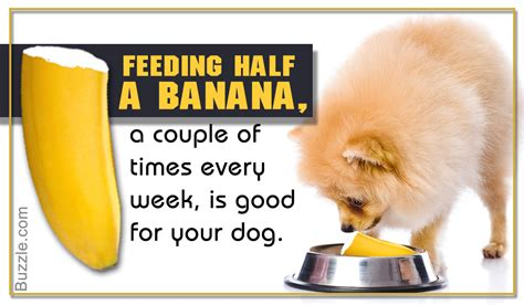 bananas safe for dogs are bananas for dogs turns out they are but not many