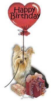 how many times a day should a yorkie eat happy birthday yorkie b day greetings yorkies and animal